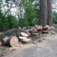 """""""Quanto accaduto l'altro ieri sul Faito è una cosa grave: il taglio di due grosse branche primarie del maestoso pino nero del Faito equivale ad uno scempio vero e proprio […]"""