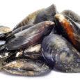 di Luigi De Rosa La polpa delle cozze è buonissima ed è superfluo elencare i numerosi piatti prelibati tipici della nostra cucina di mare che di questo frutto esaltano tutto […]