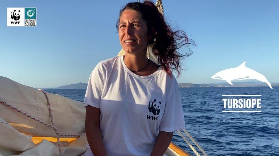 di Luigi De Rosa Sorrento (NA) – Il 2021 si può definire l'anno delle balene per la Penisola Sorrentina. La prima assurta agli onori delle cronache è stata una balenottera […]